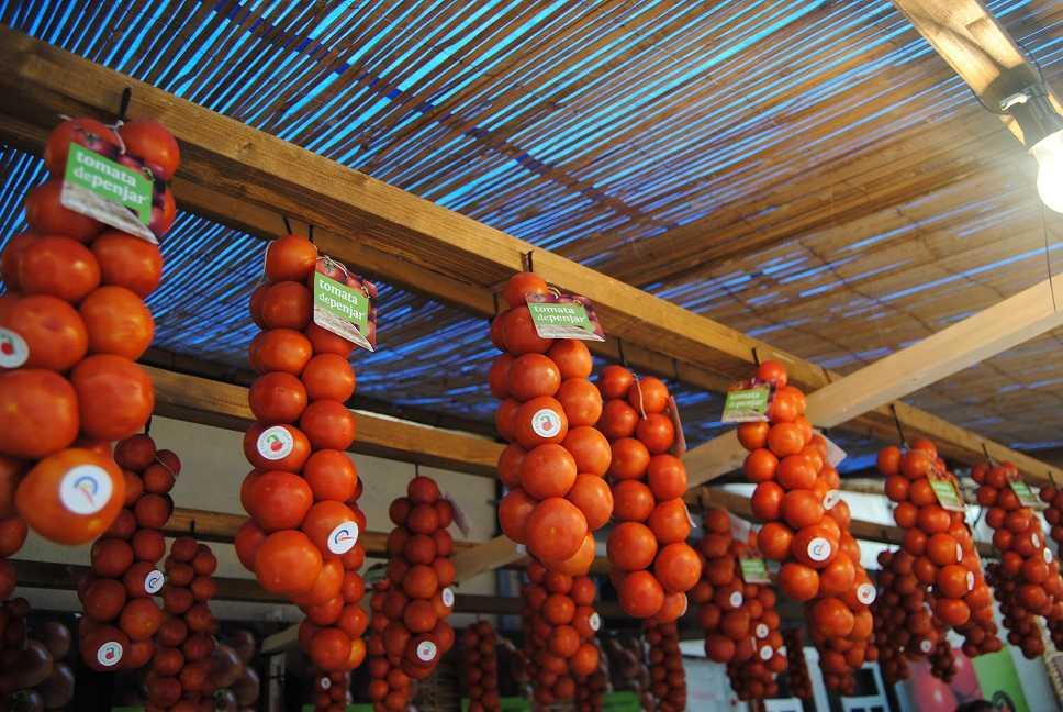 Fira de la Tomata de Penjar d'Alcalà de Xivert