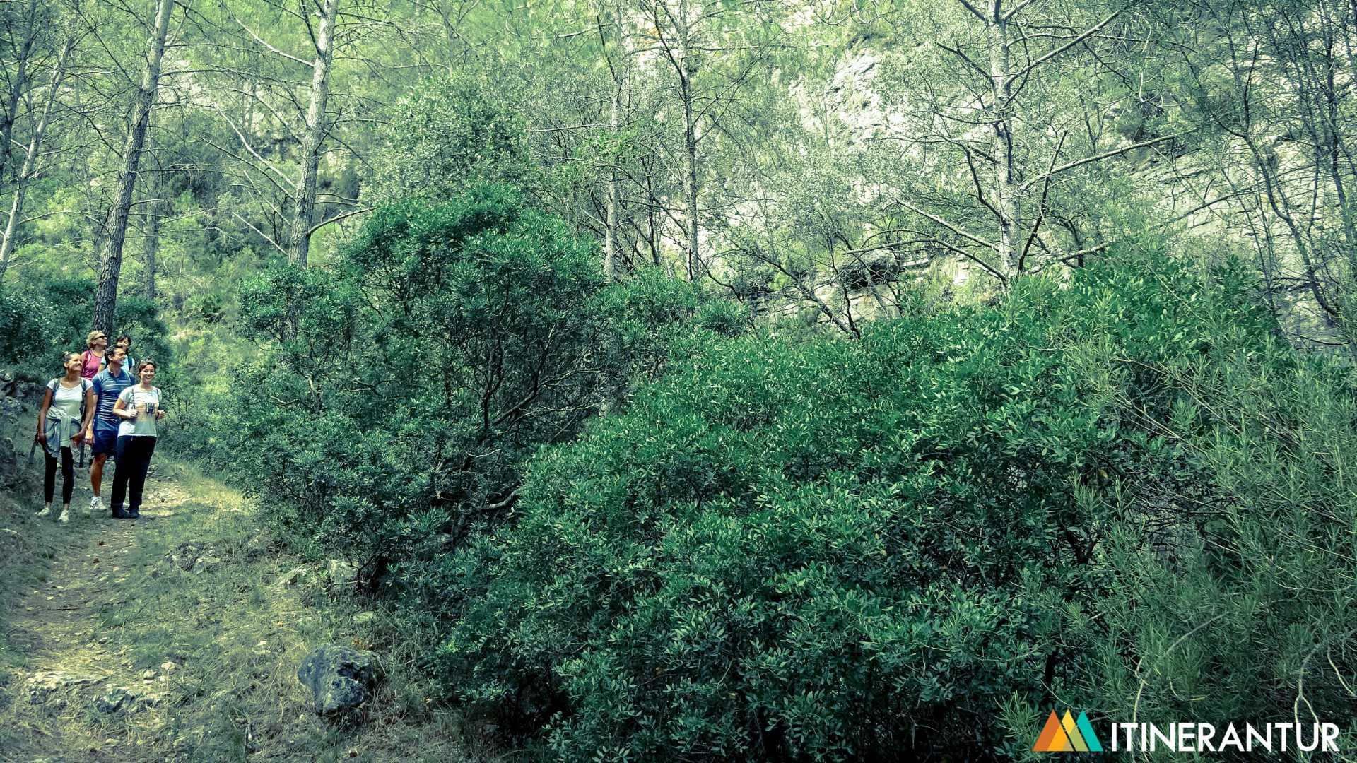 La vida en los bosques del río Sénia