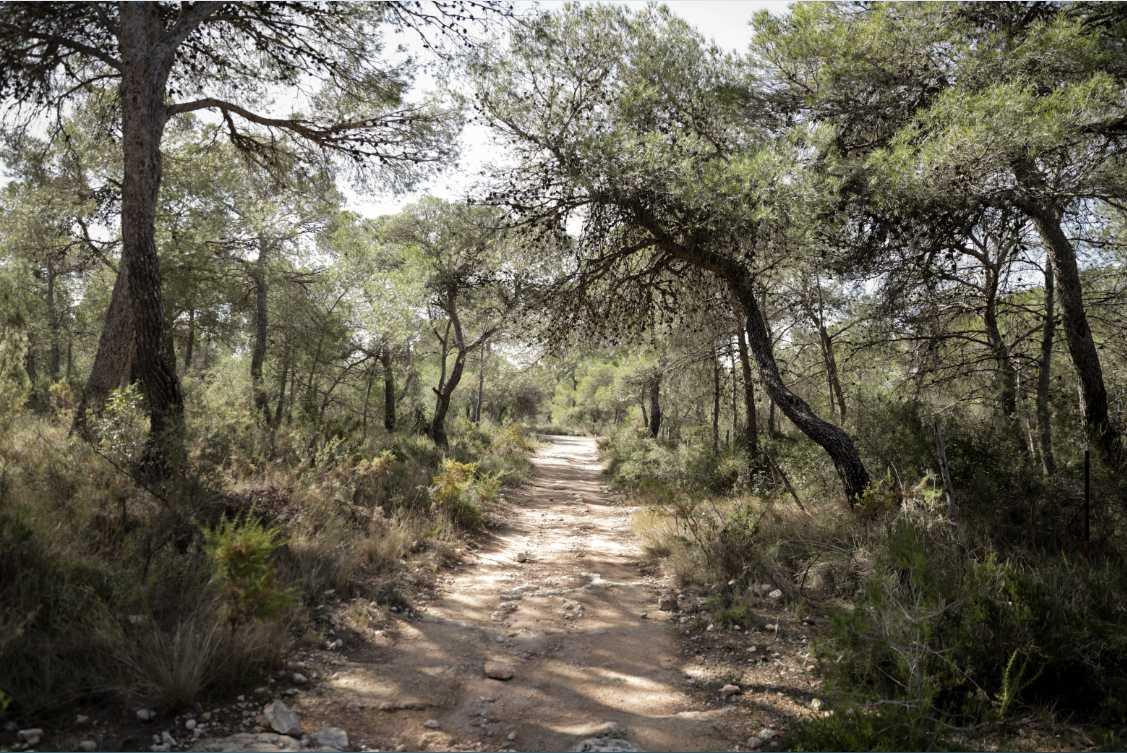 Bosque de La Vallesa de Paterna