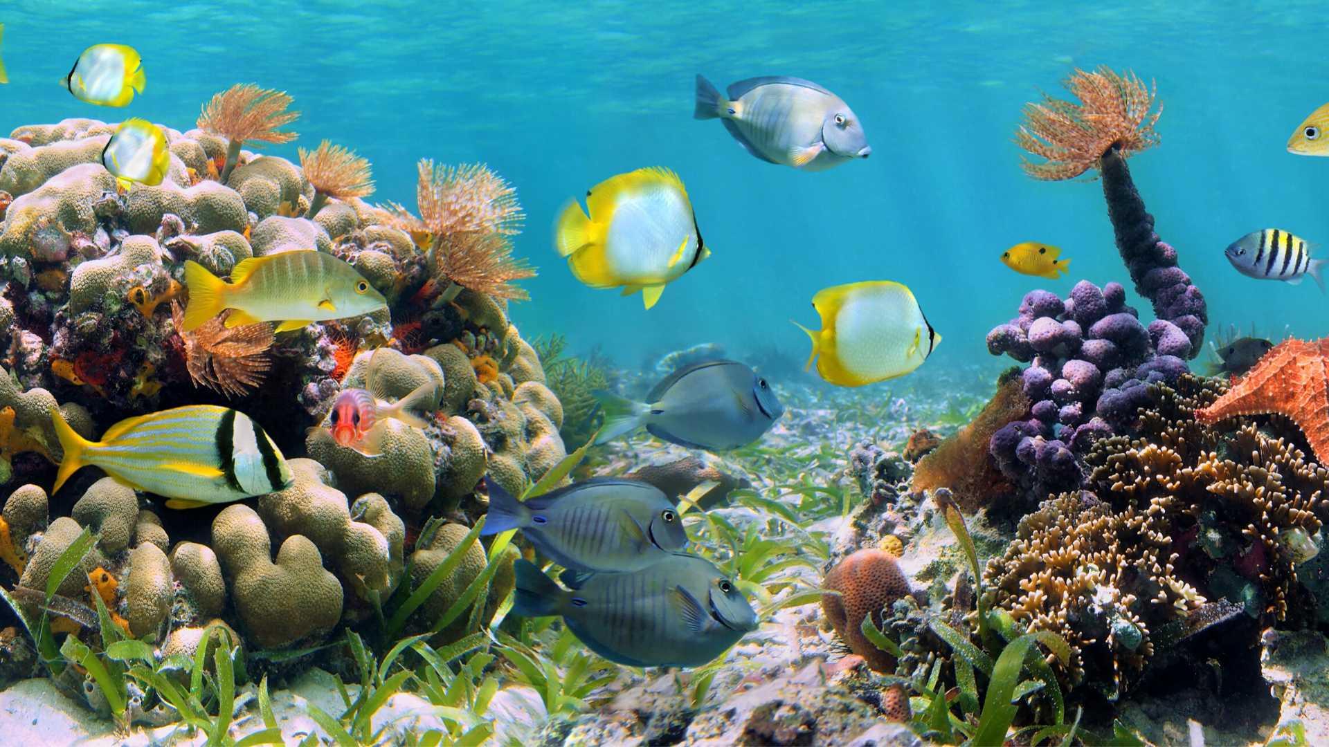 La biodiversité de nos plages
