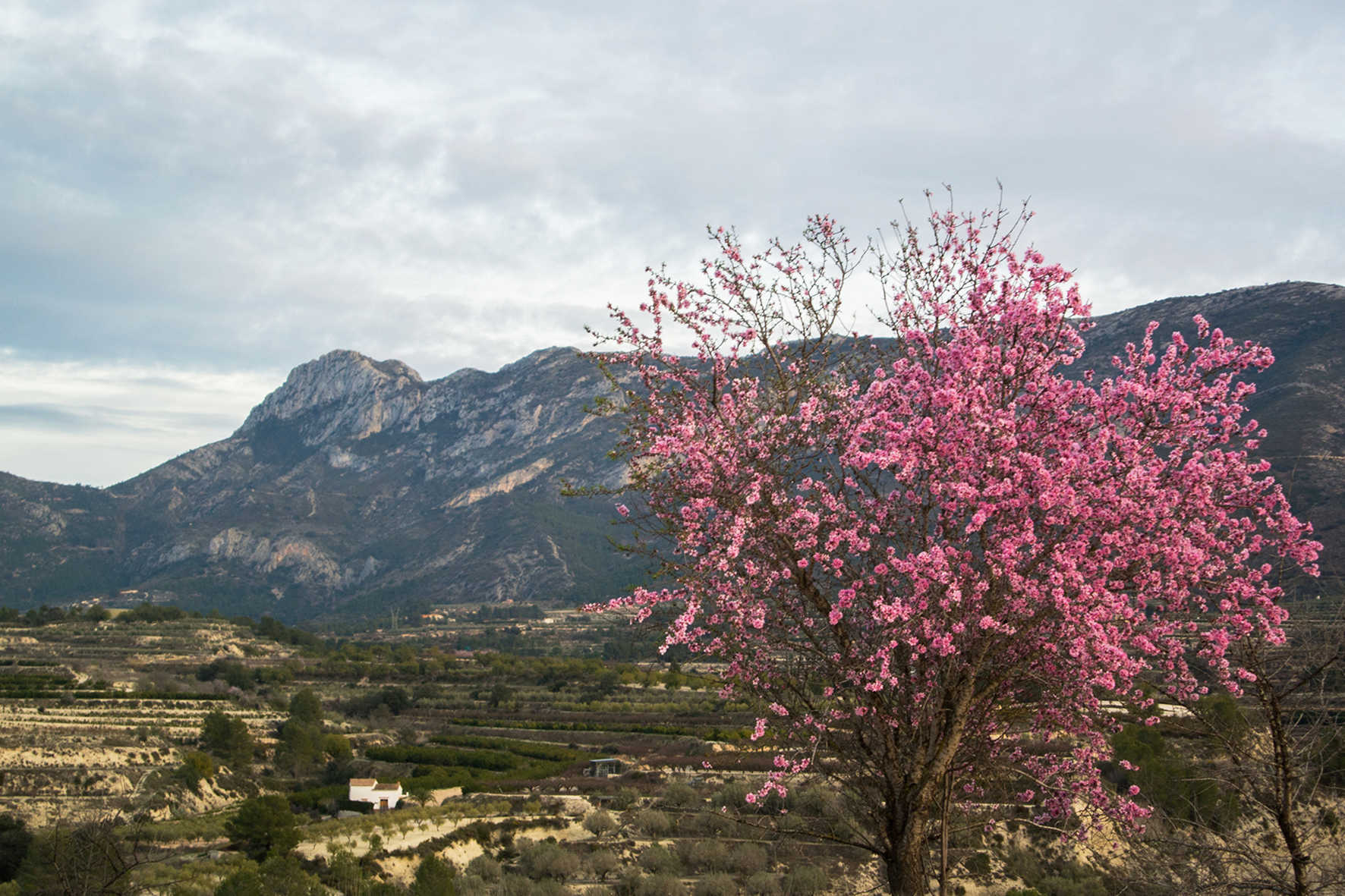 Solana de Benicadell protected landscape