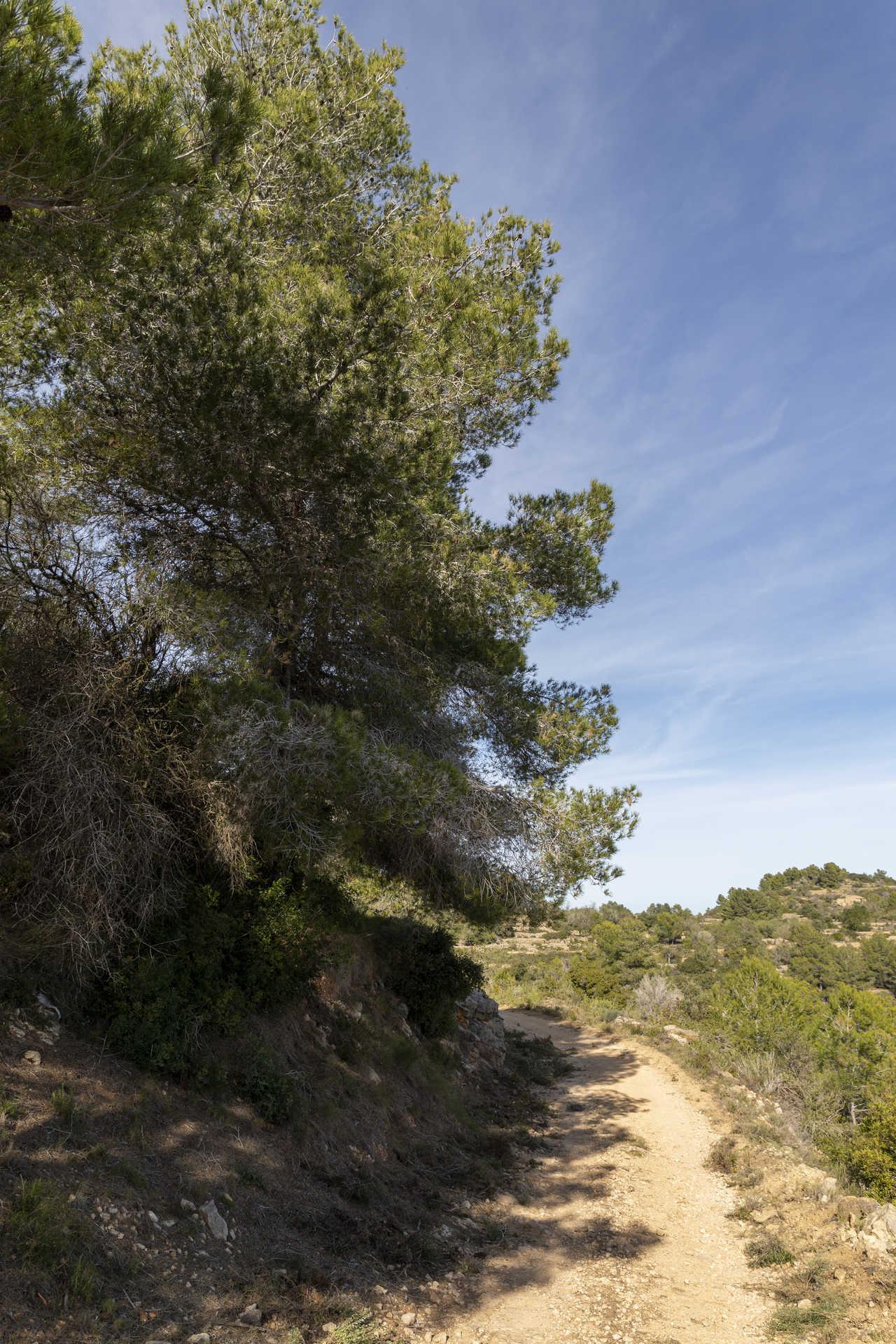 Árbol fosilizado