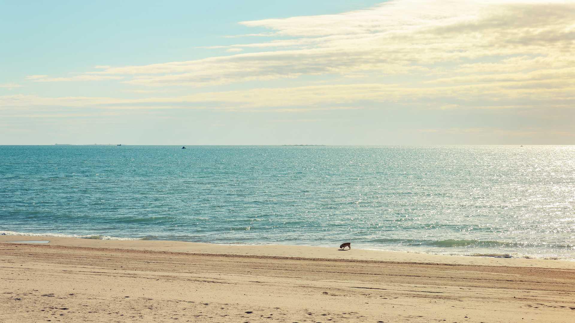 plages pour chiens castellon