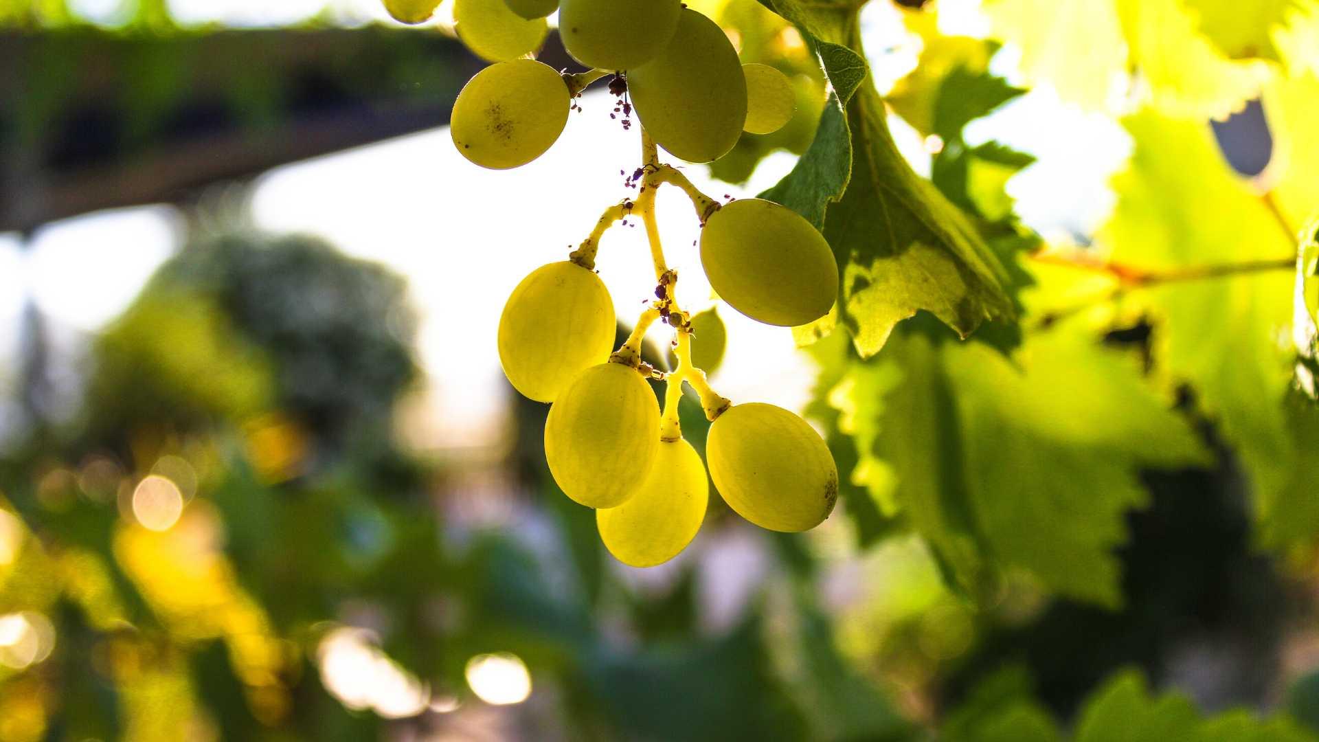 Utiel-Requena Wine Trail