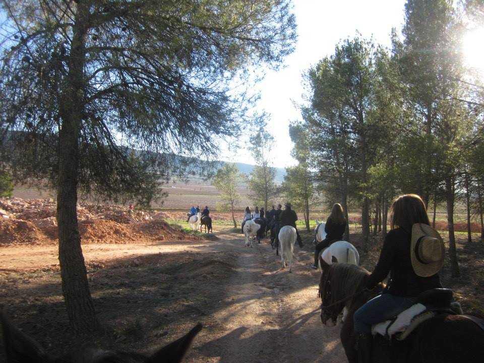 FIELD& HORSE