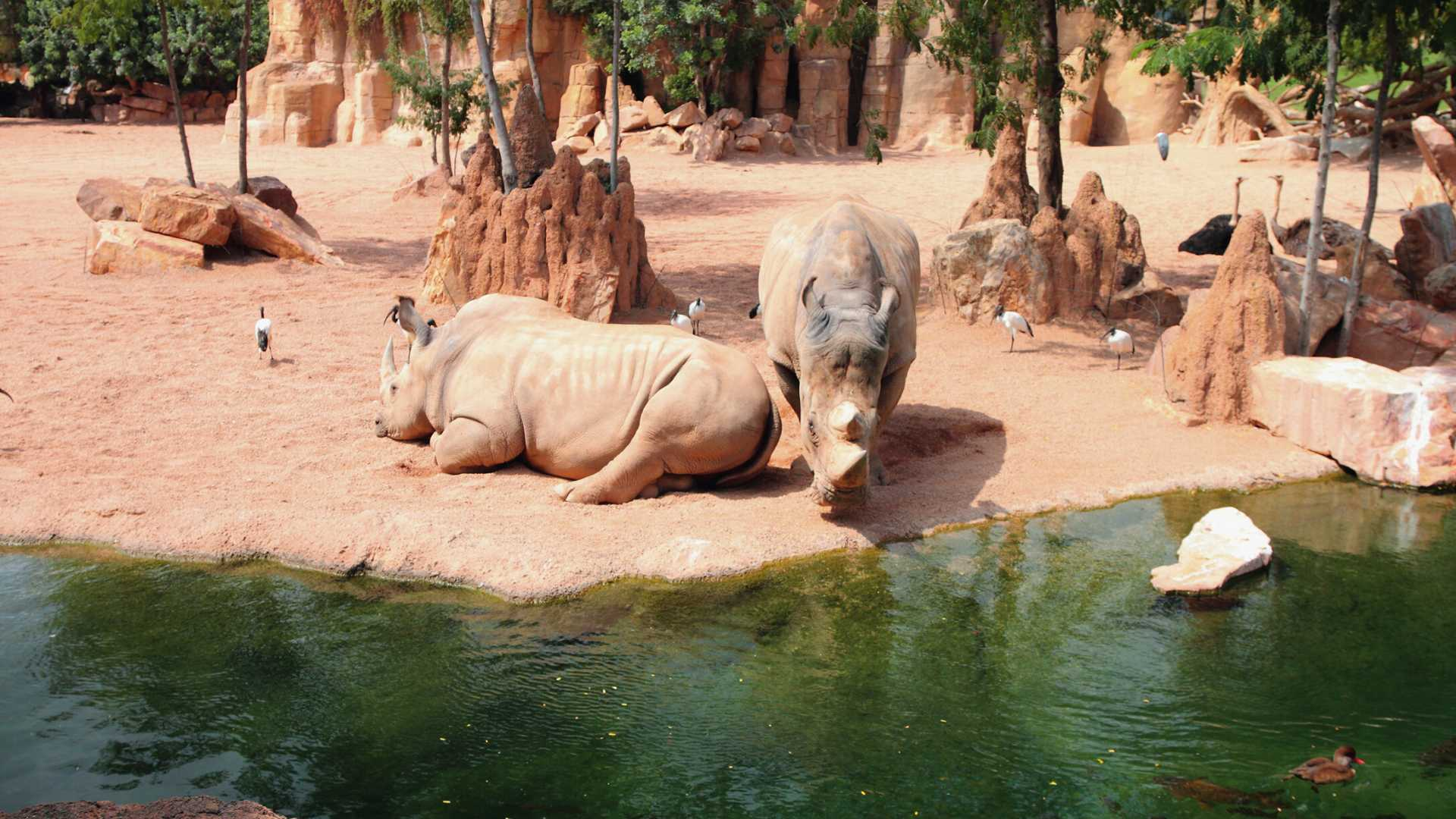 Bioparc Valencia Reopening