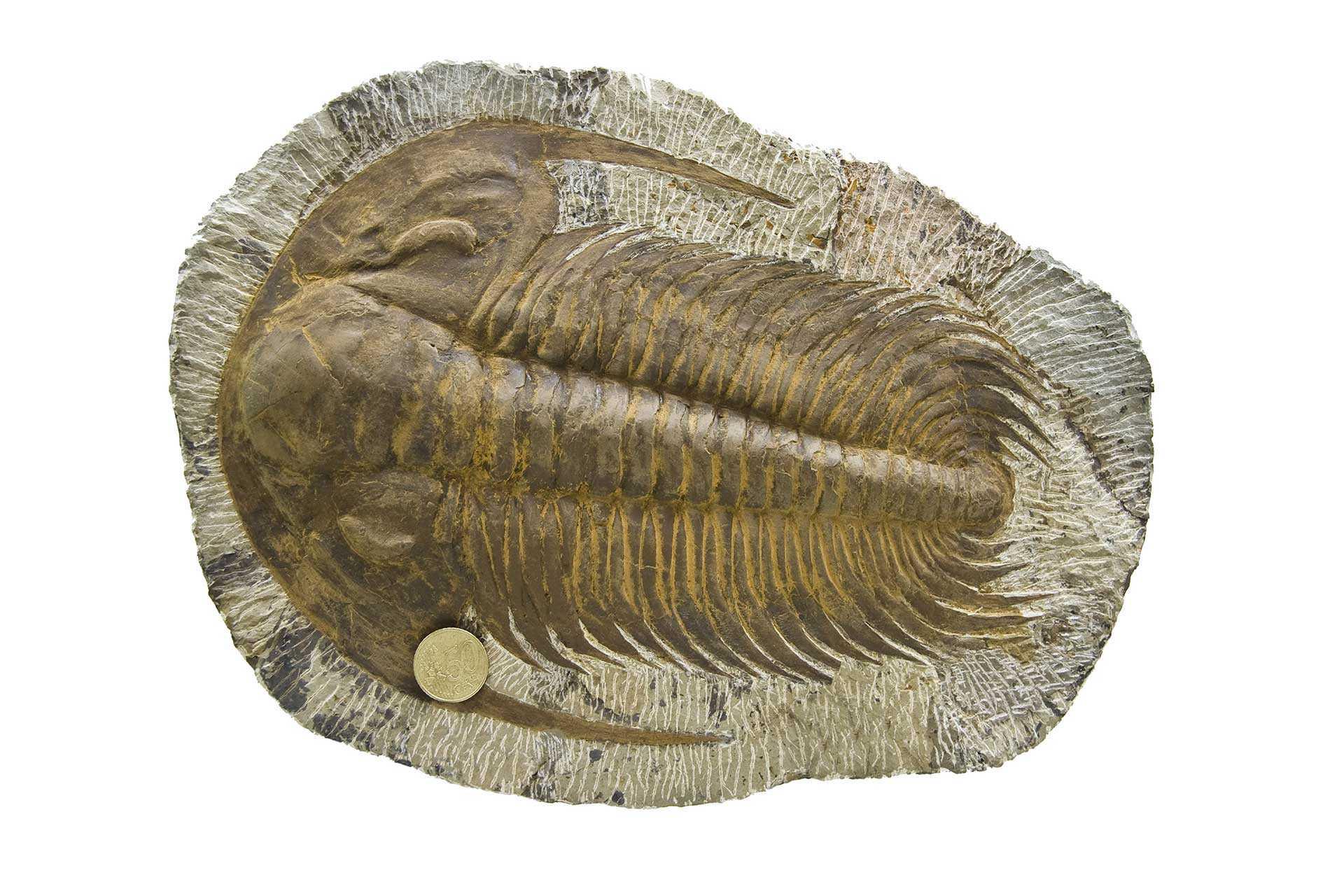 Musée Paleonthologique Juan Cano Forner