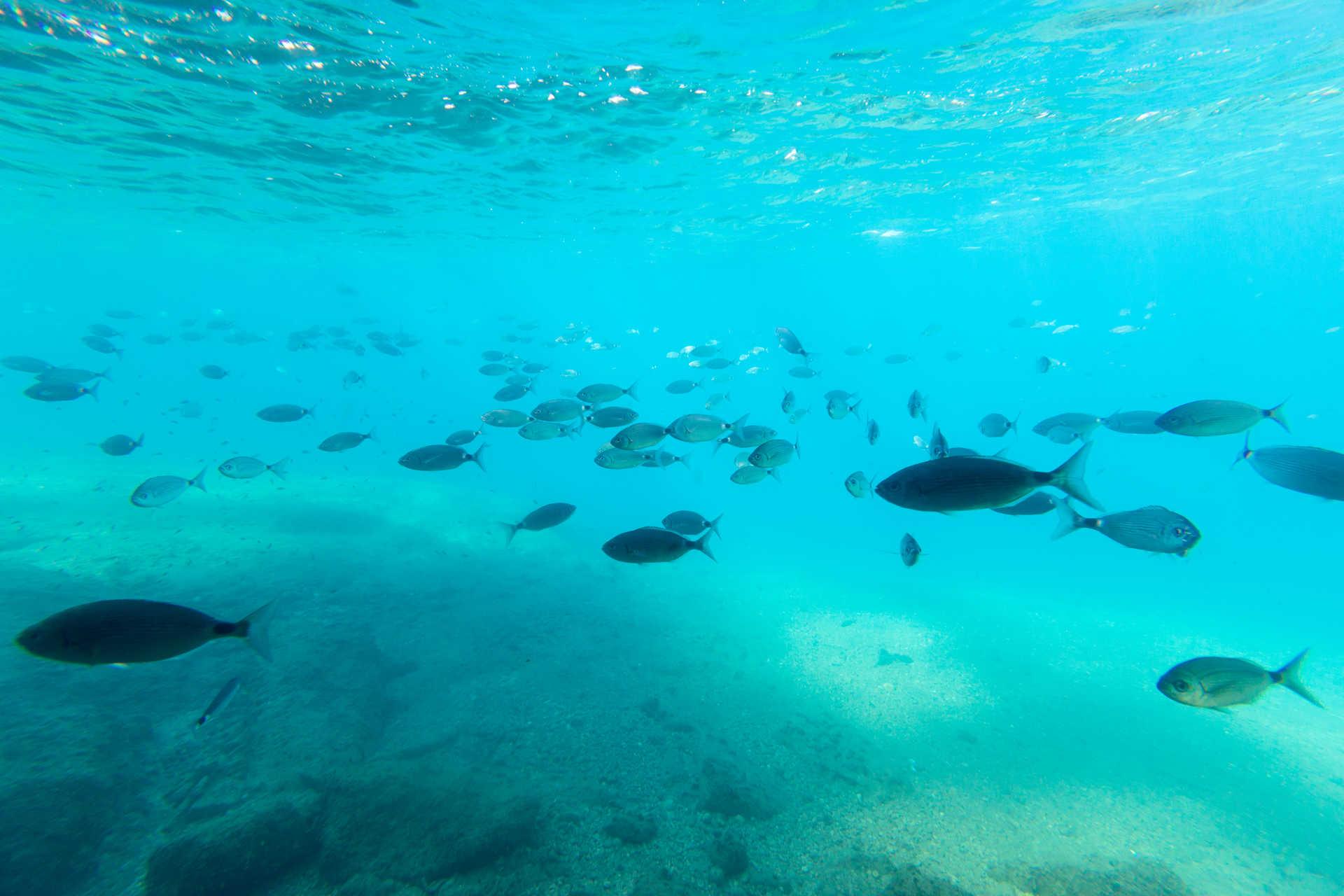 Isla Benidorm 2