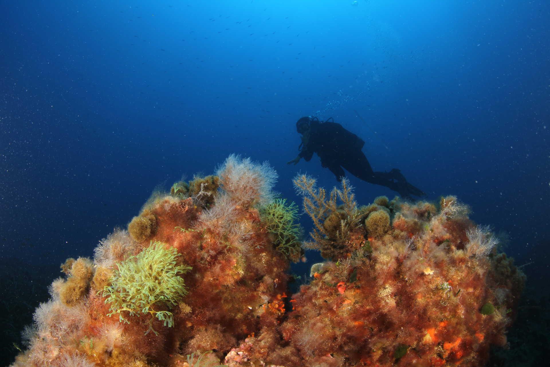 Reserva Natural Marina de l'illa de Tabarca