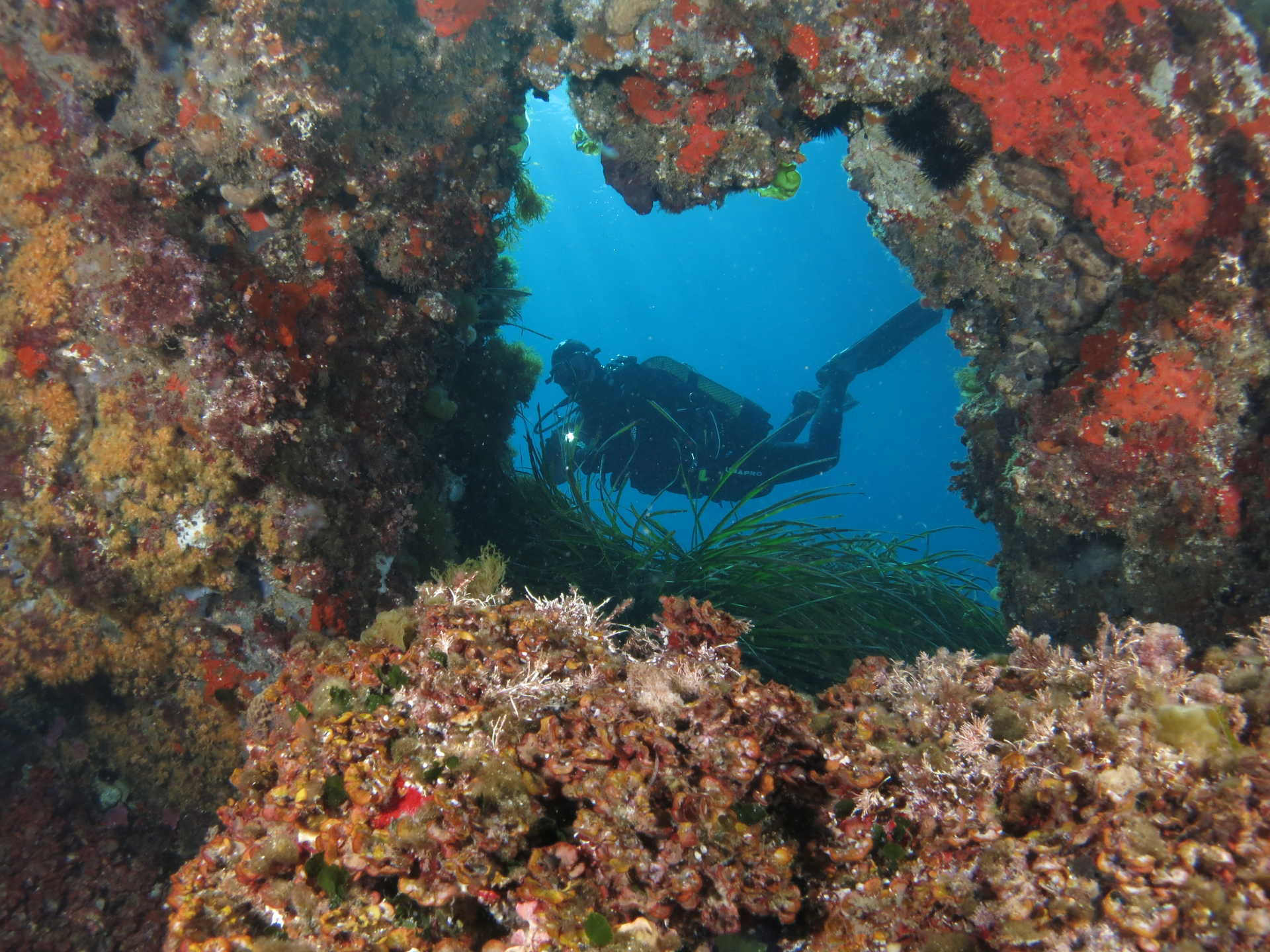 Tabarca Island Reserve Marine