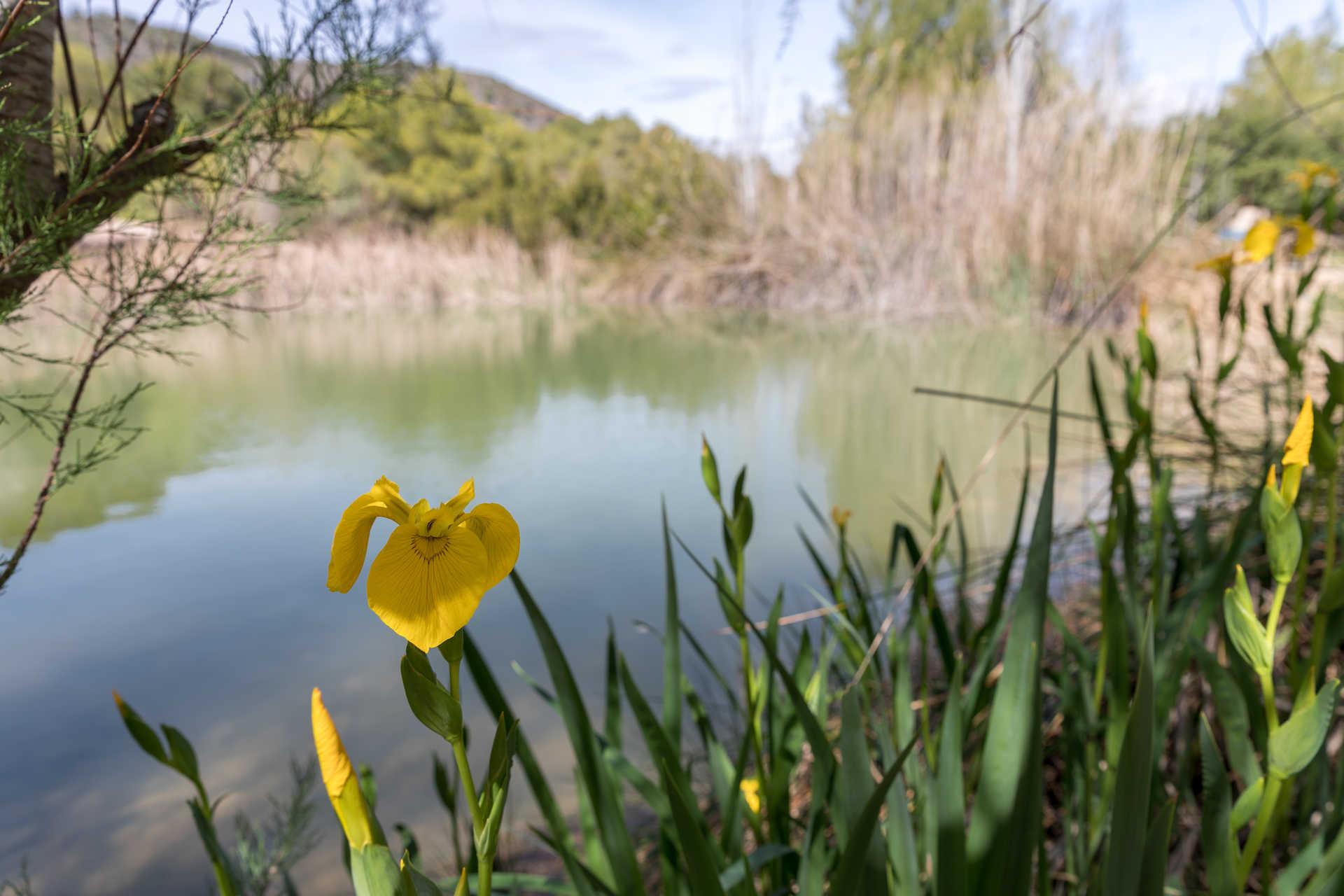 Turia River Natural Park
