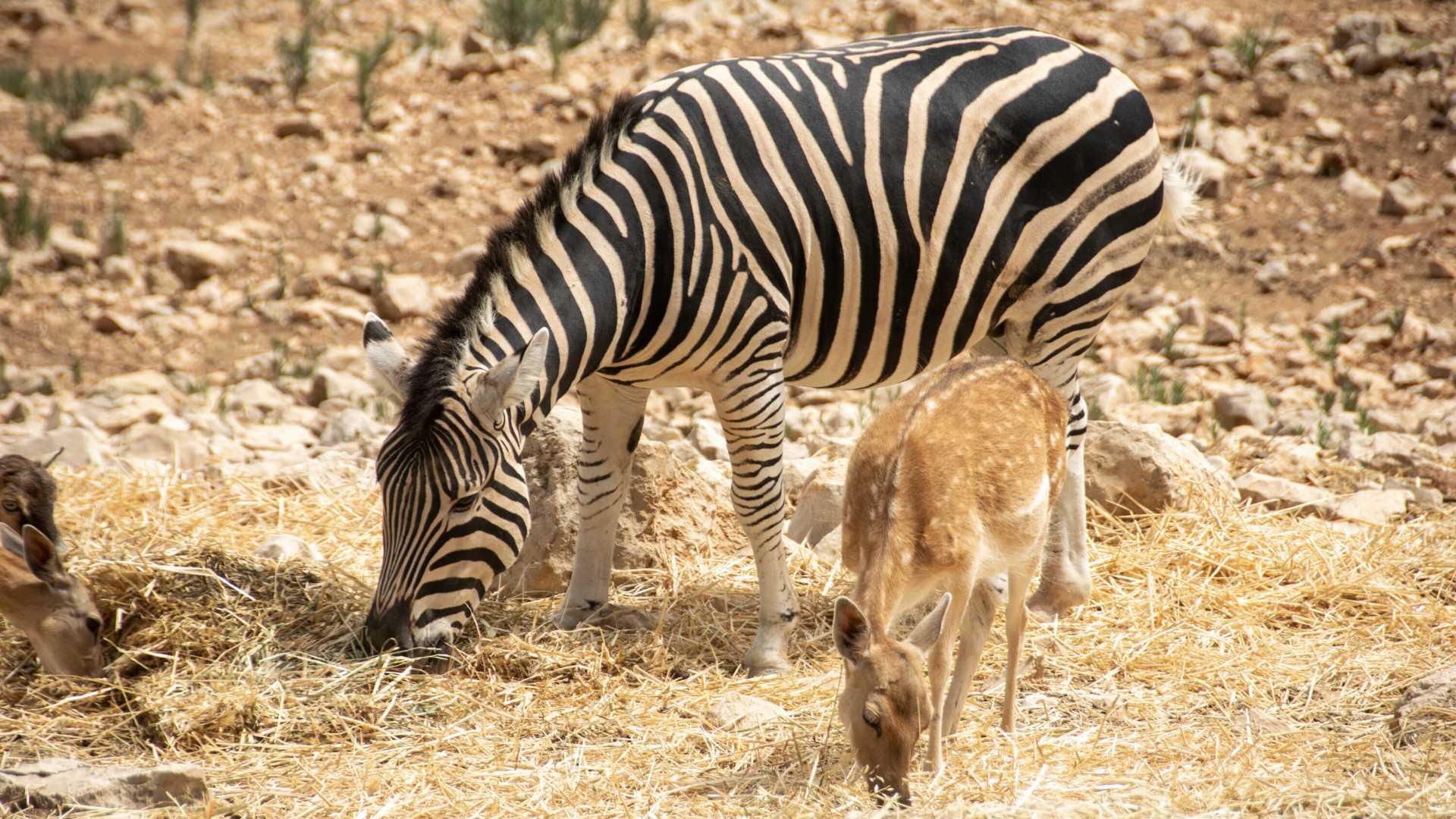 how to get to safari aitana