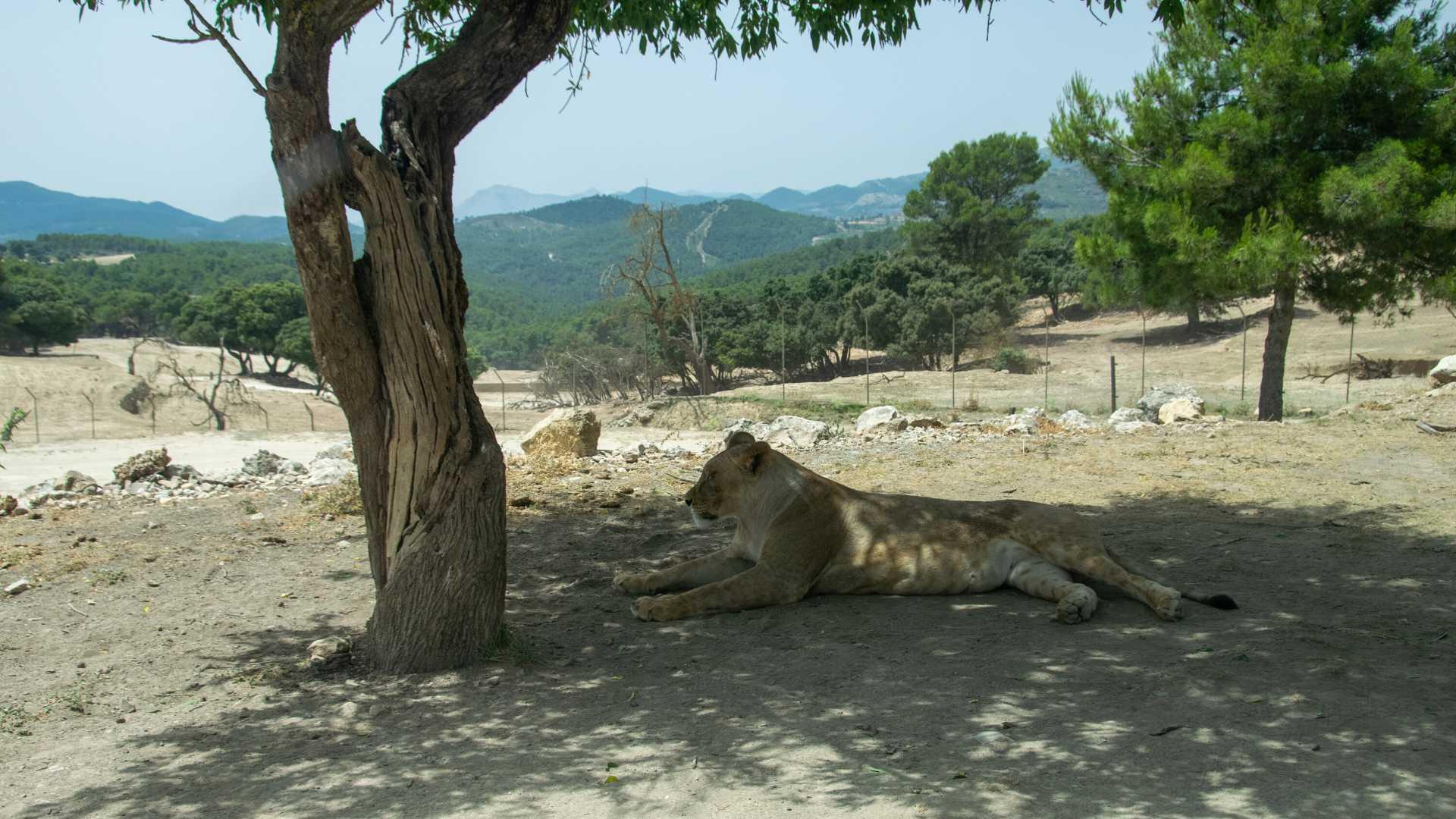 Safari Aitana