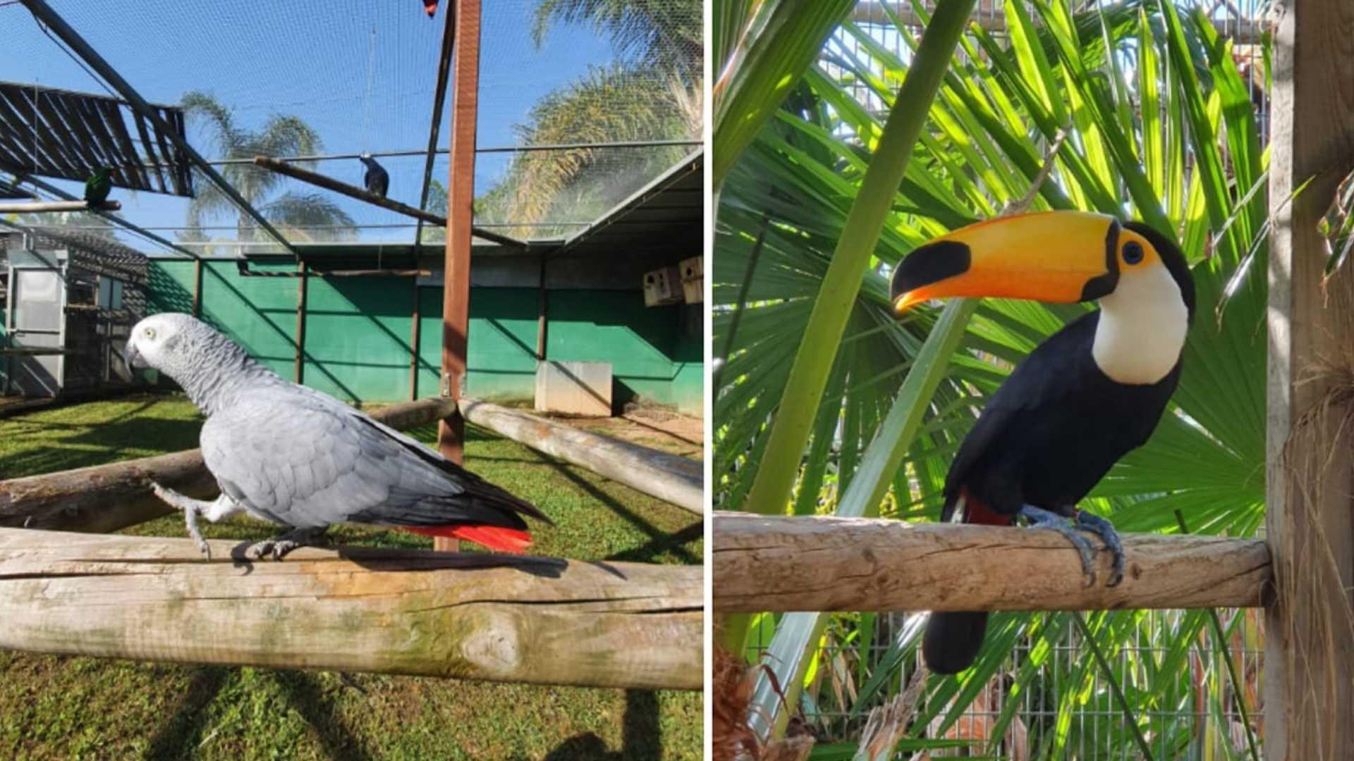 Jardin del papagayo benicarlo