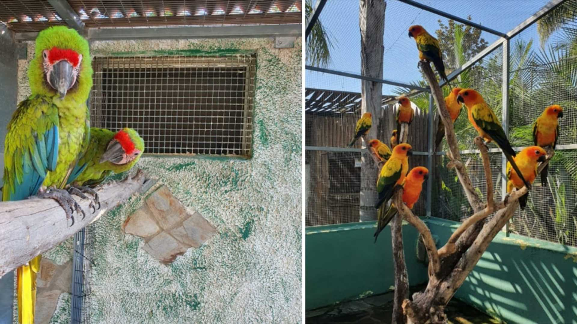 como llegar al jardin del papagayo