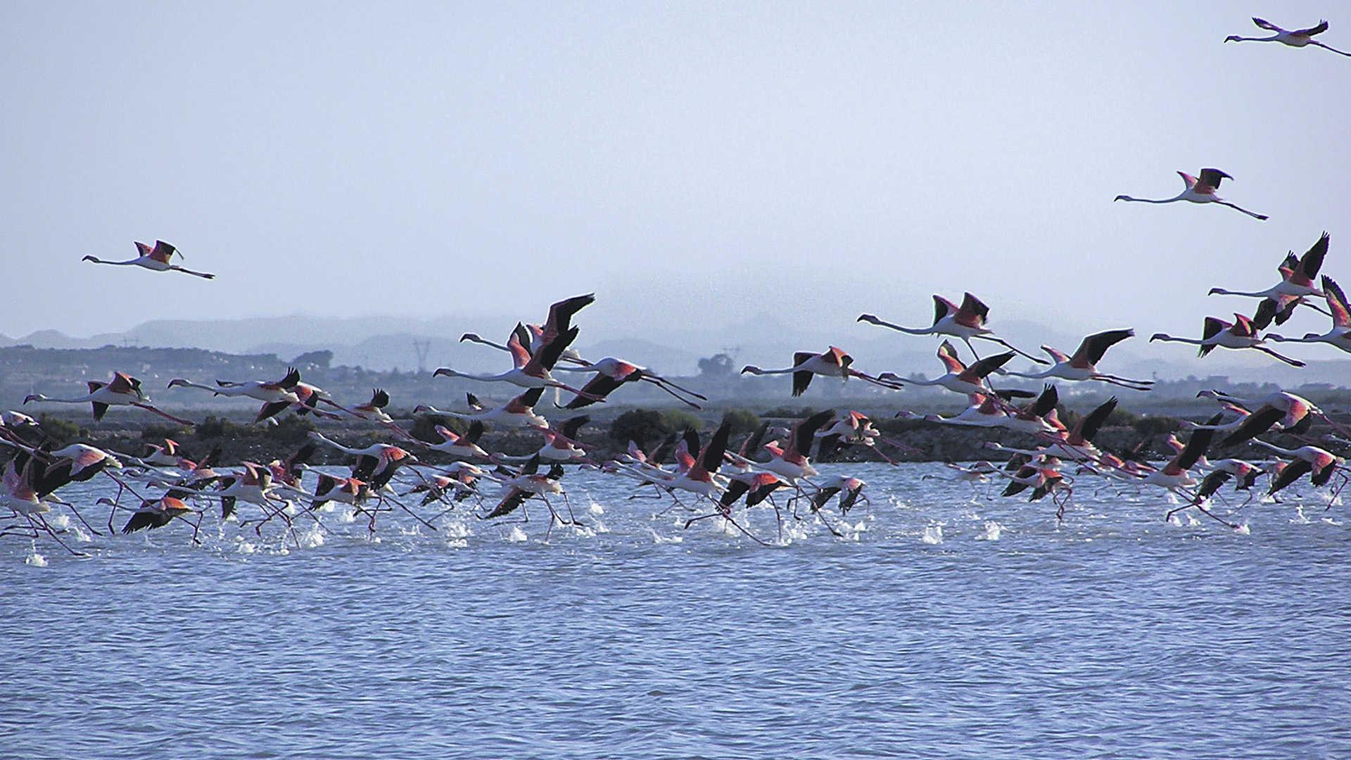 Santa Pola Salt Flats Nature Park