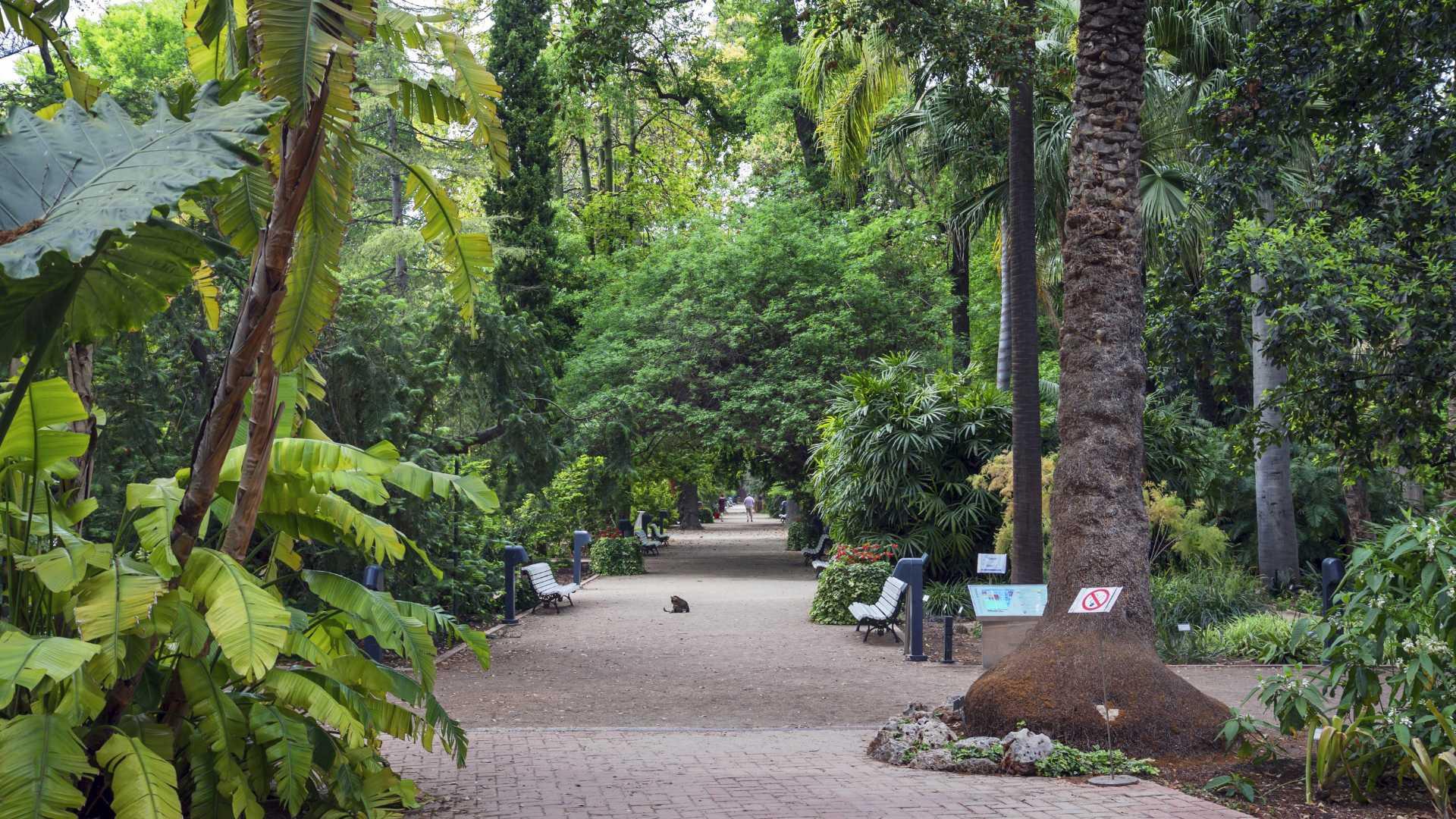 Botanischer Garten von València