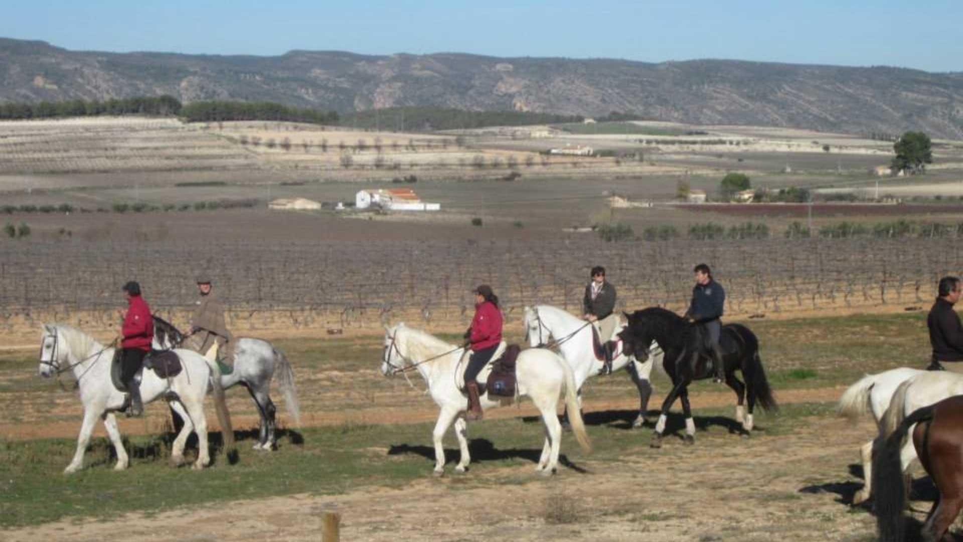 pferde valencia