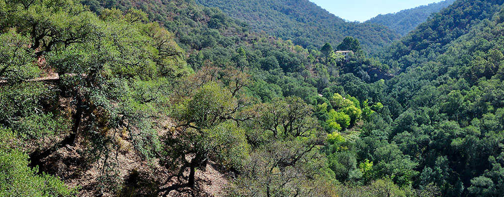 Parque Natural Sierra Espadán
