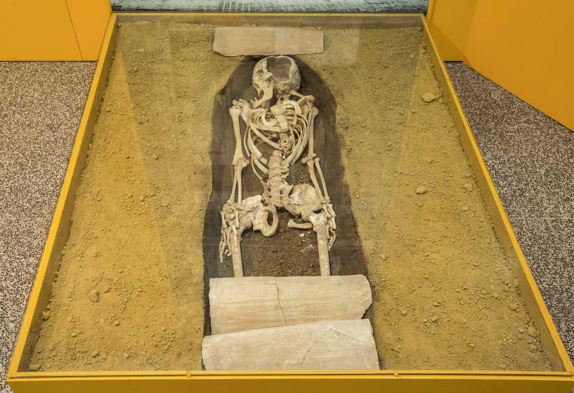 Archäologisches und Paläontologisches Museum Von Novelda