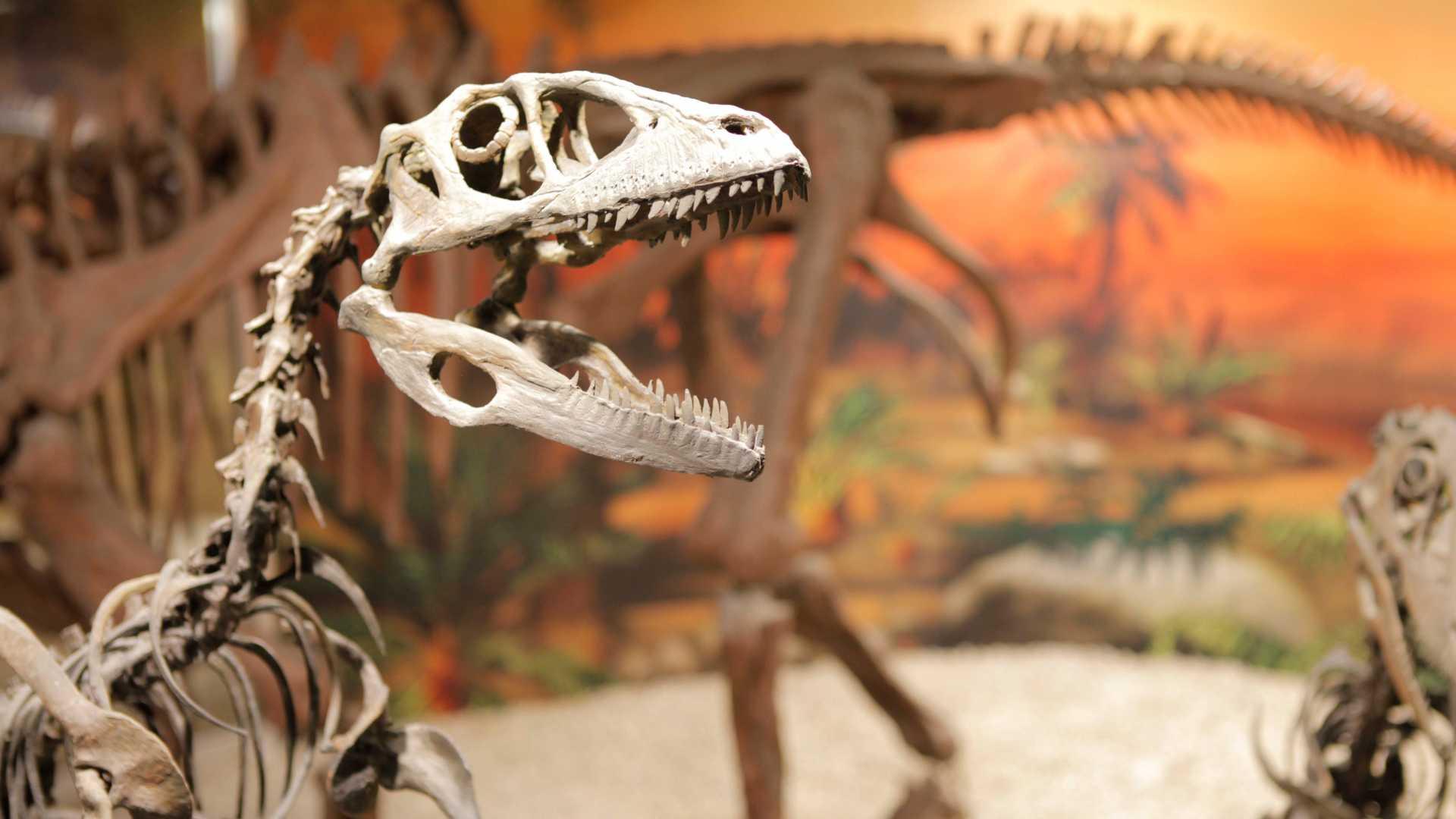 Visitas guiadas Museo Paleontológico de Elche