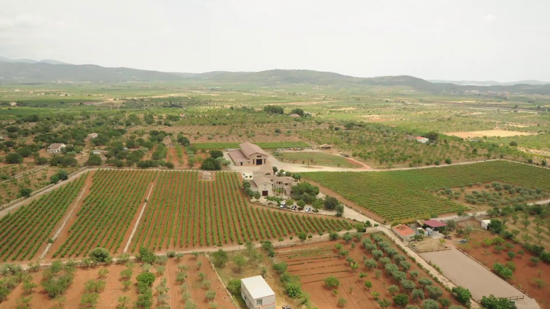 bodegas provincia castellon