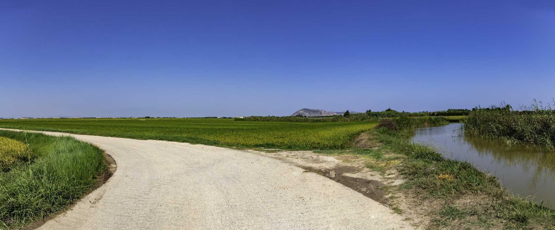 Ruta entre arrozales por el marjal sur