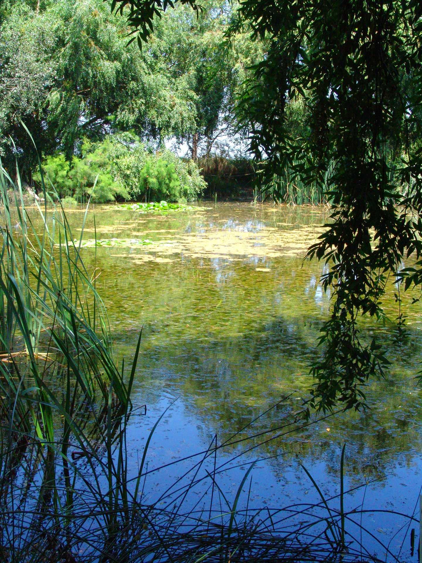 Laguna del Samaruc