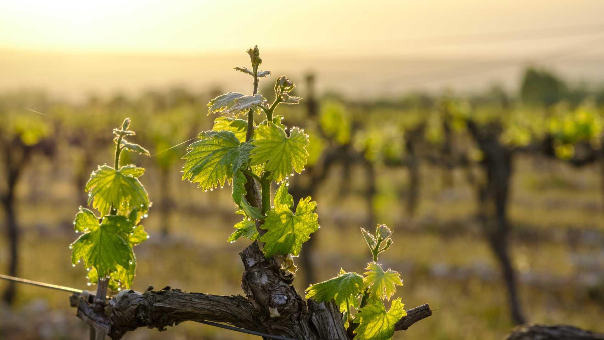 Routes touristiques benicarlo vin carlon