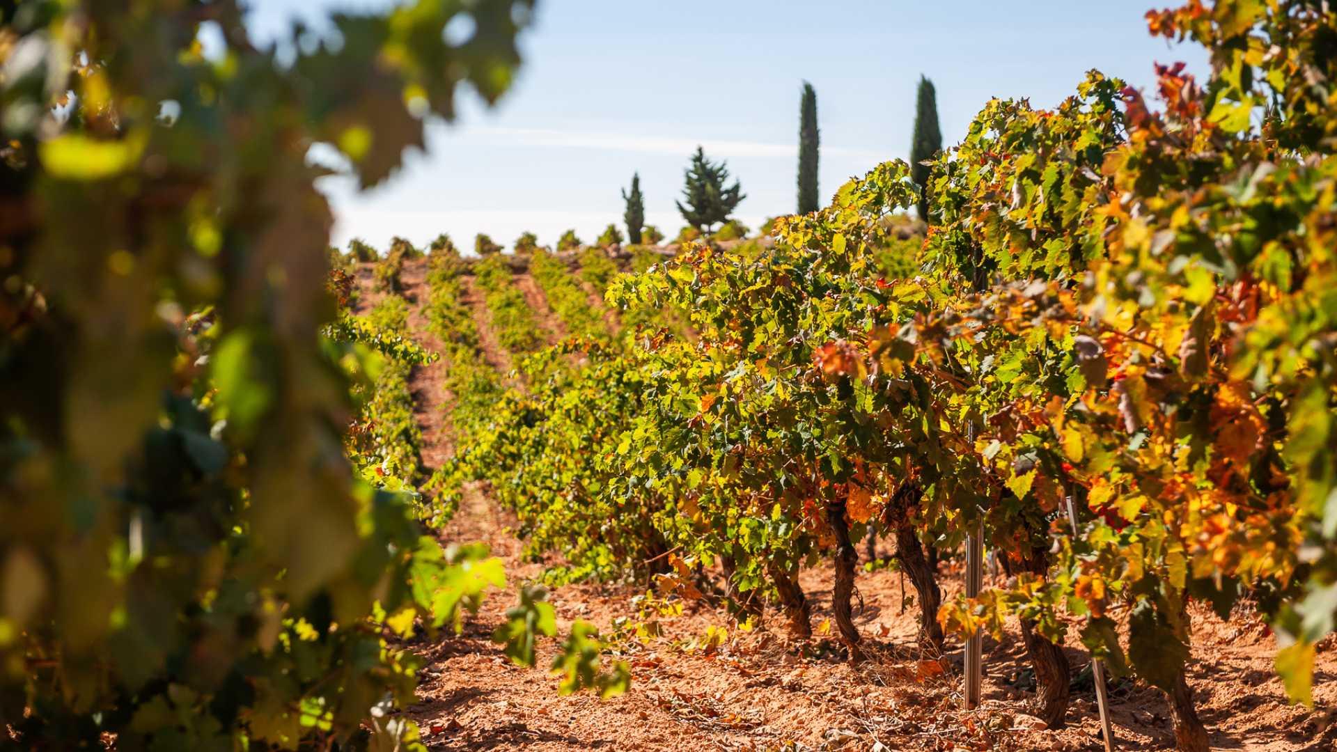 wines valencia