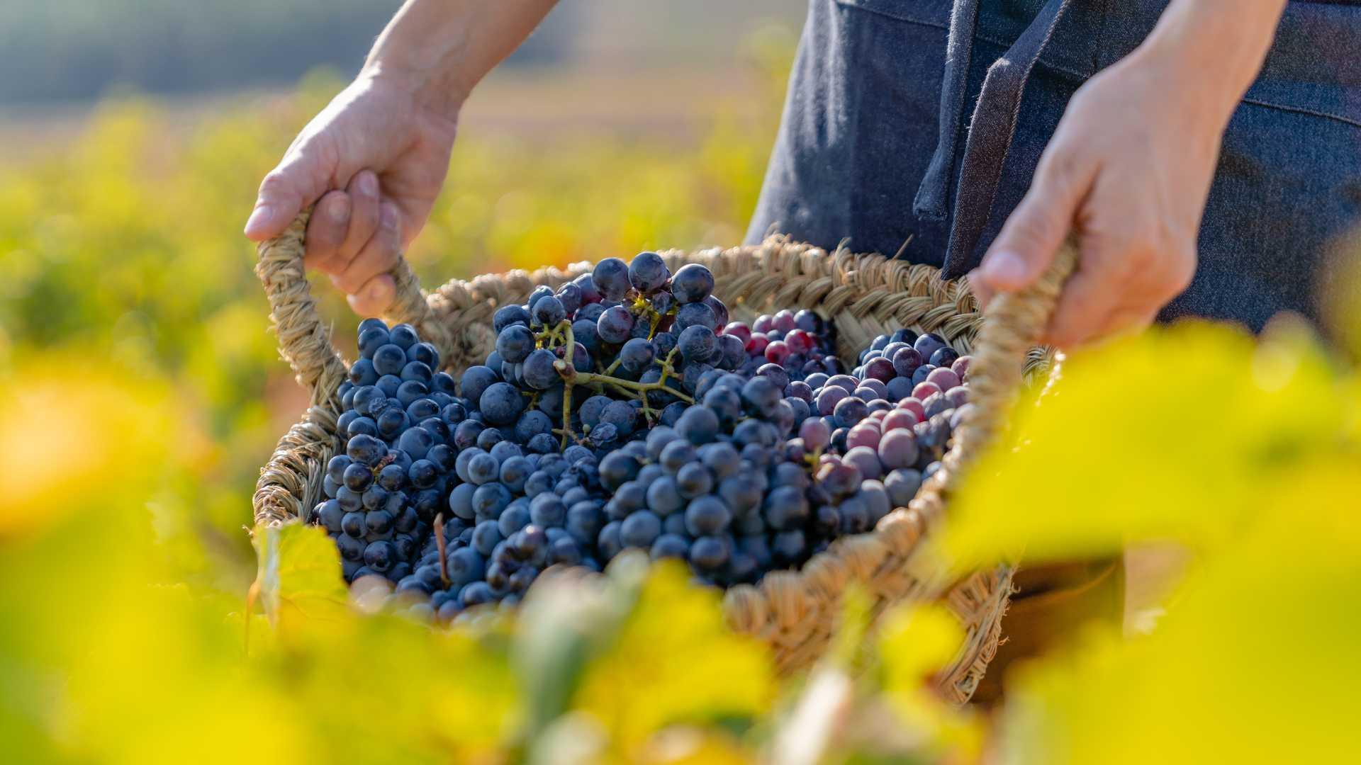 wines region of valencia