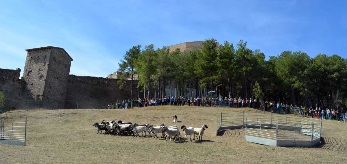 Feria ganadera y agrícola