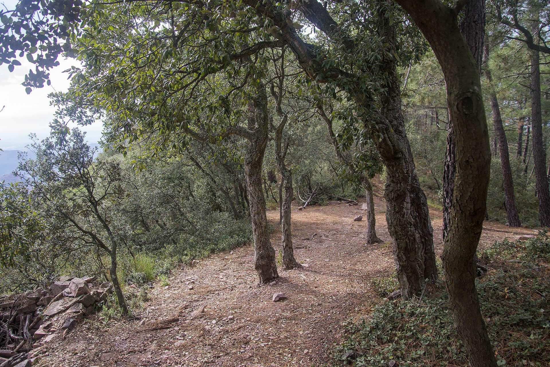 Parque Natural de la Sierra de Espadán