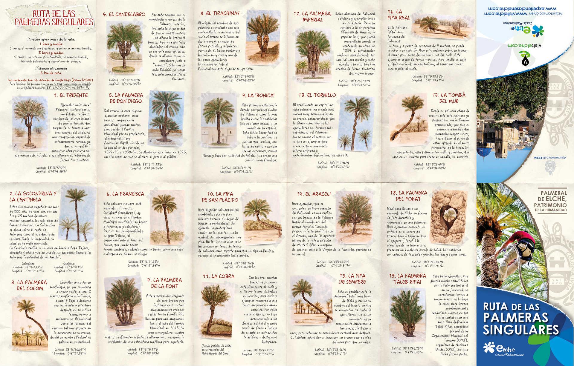 Ruta de las palmeras singulares