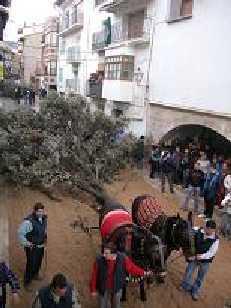 Fiesta de San Antonio Abad. Cinctorres