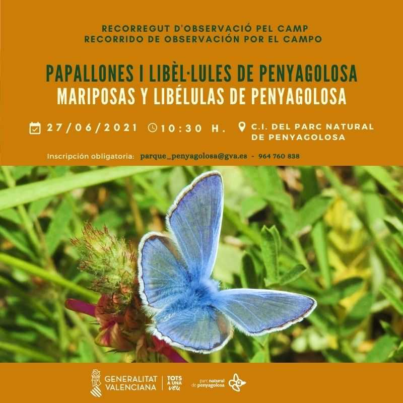 MARIPOSAS Y LIBÉLULAS DE PENYAGOLOSA