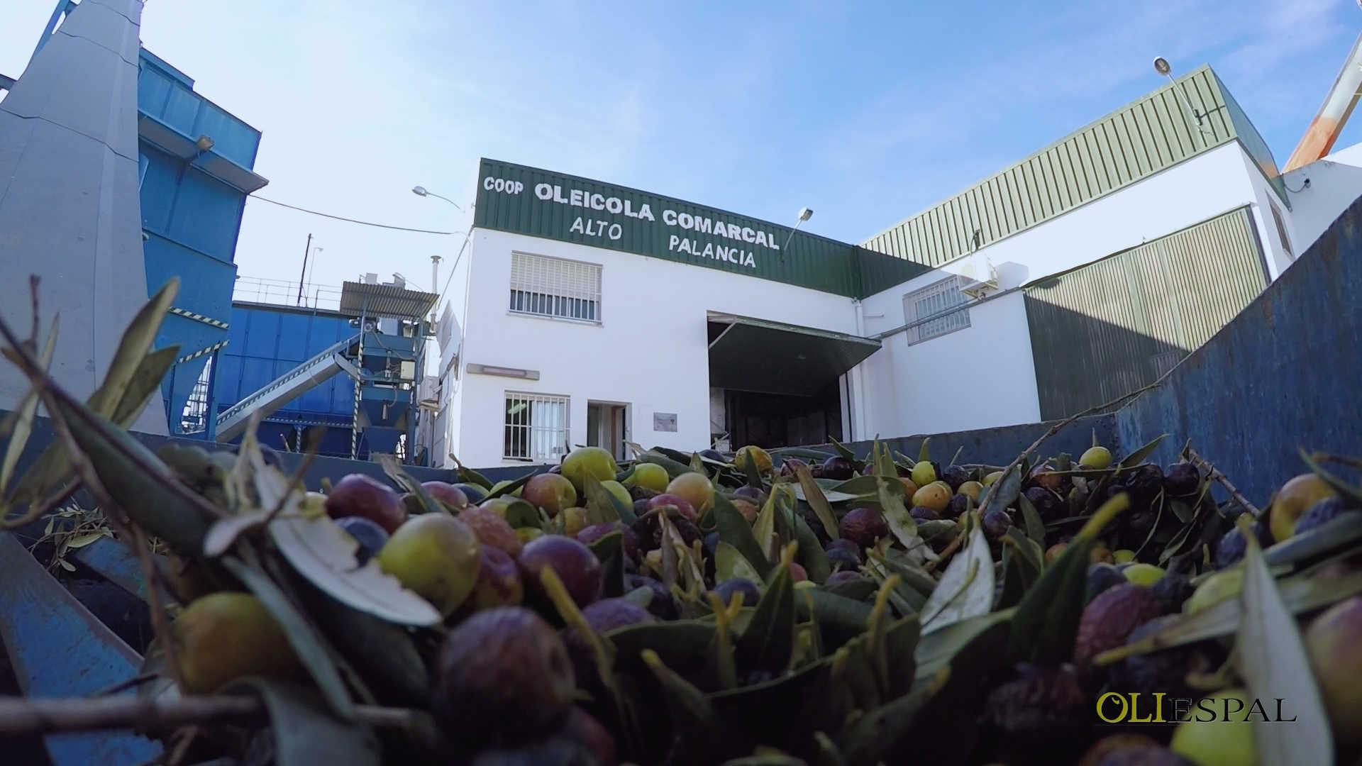 COOPERATIVA AGRICOLA OLEICOLA DEL ALTO PALANCIA COOPERATIVA VALENCIANA DE 2º GRADO
