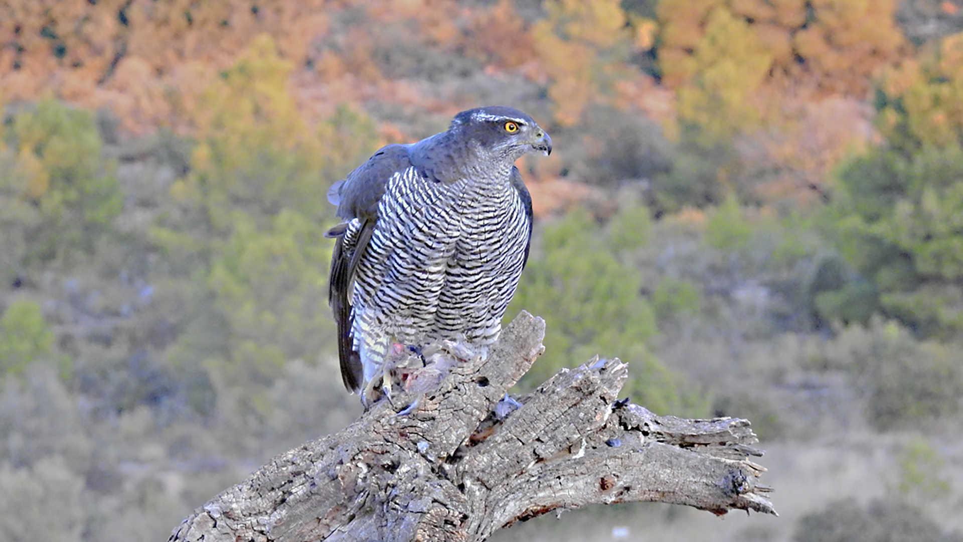 empresa birdwatching valencia